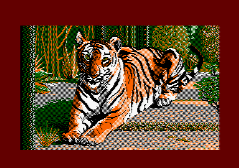 Tiger by Jill Lawson, mode 1 picture on an Amstrad CPC